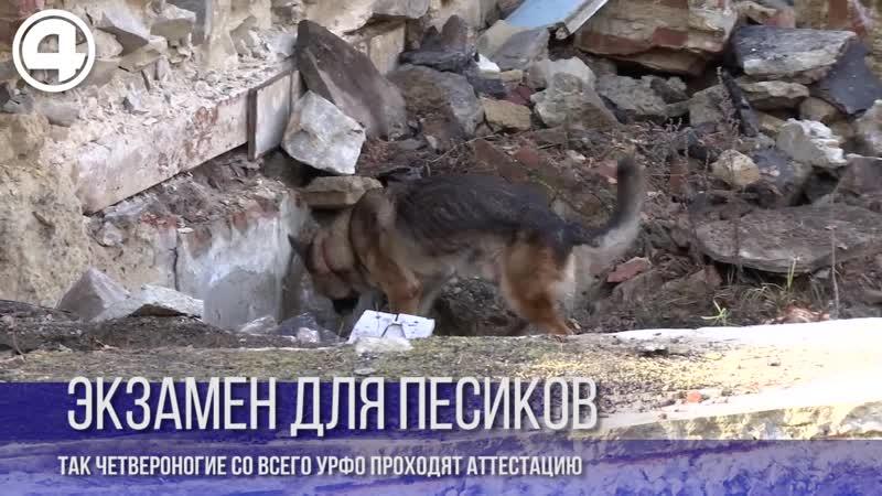 Экзамен для собак-ищеек