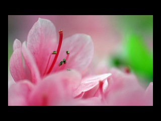 Relax Beautiful and colorful blooming roses, lily, daisy, marigold, iris and more flowers time lapse