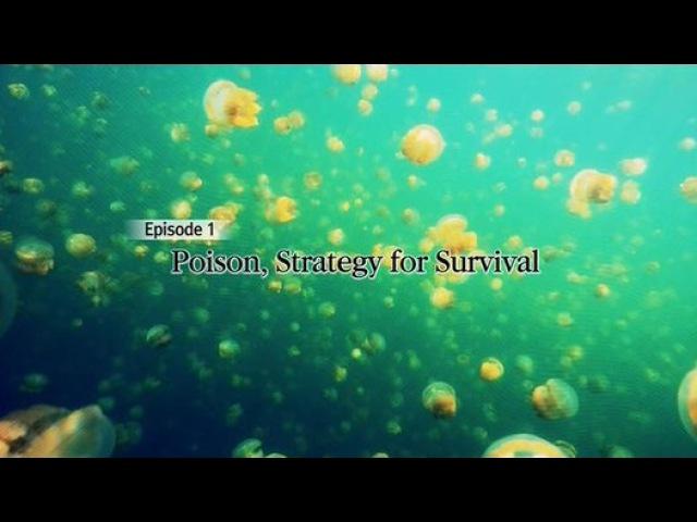 Яд Достижение эволюции 01 Яд и стратегия выживания 2015