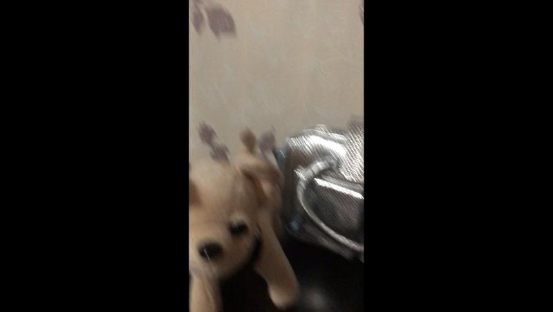 Собачка Кикки, 22см, муз(укр), в сумке,на бат-ке,в разобр. кор-ке, 29-31-17см. 483 грн