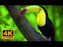 Breathtaking Colors of Nature in 4K III 🐦Beautiful Nature Sleep Relax Music 4K UHD TV Screensaver