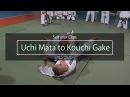Uchi Mata setup for Kouchi Makikomi