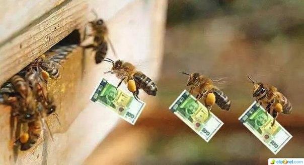 Поздравления с днем рождения мужчине пчеловоду гифки