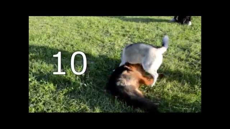 Урок 10 Подготовка к выходу с собакой в город
