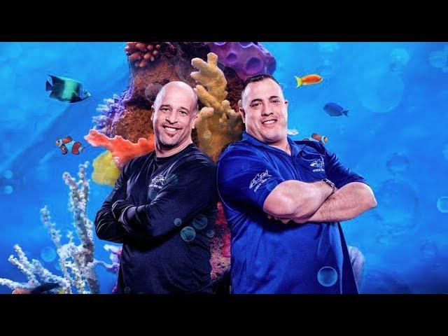 Аквариумный бизнес Настоящие аквариумы Беверли Хиллз