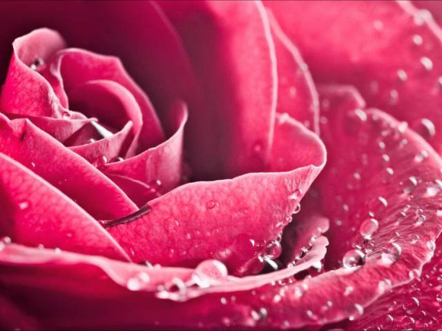 Медитация Лепестки роз