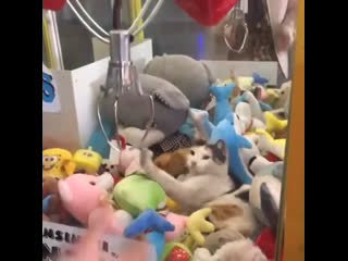 Guardian of a claw machine