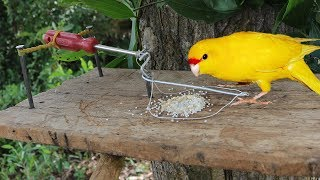 You ever See about Installing Parrot Trap using Screwdriver bird trap make from Screwdriver
