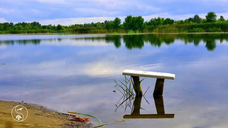 ДУШЕВНО СИДИМ НА ПРУДУ. Красивое видео, виды на пруд, красивая природу, звуки природы, РЕЛАКС