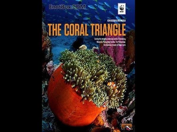 Великие тайны Кораллового треугольника. часть 1