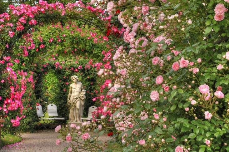 Розы полезны для Благодати, изображение №1