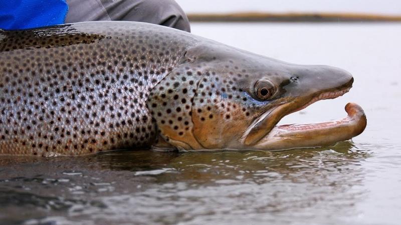Tierra del Fuego - Rio Grande Fly Fishing by Todd Moen