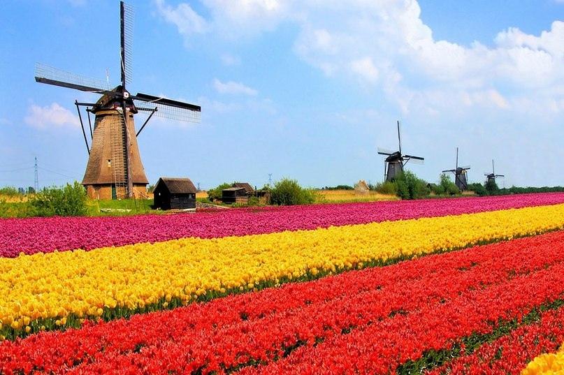 Страны мира — Нидерланды, изображение №5