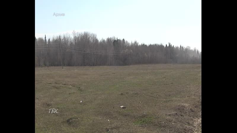 Колпашевские охотники выслеживают трёх медведей, которые бродят вблизи населённых пунктов