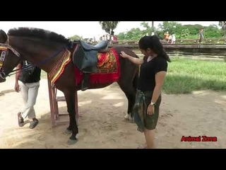 Animal Zone Show King Horse At Angkor Wat Girl with King Horse Pets Horse