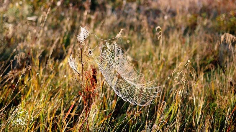 КРАСИВОЕ УТРО НА ЛУГУ все в росе паутинки переливаются В ЛУЧАХ СОЛНЦА красивая природа ДУШЕВНО