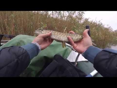 КЛЮЁТ ЛИ ЩУКА В ДОЖДЬ Щука и окунь на джиг. Рыбалка в октябре