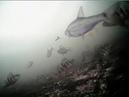 Окунь и плотва съемки под водой Апарки Пронь