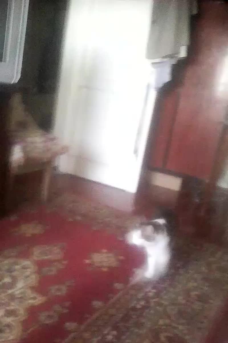 ВТОРОЙ ДЕНЬ (живет у меня кот Семка).