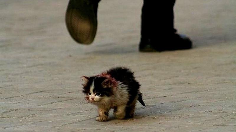 грустные картинки бездомных животных до слез инстаграм