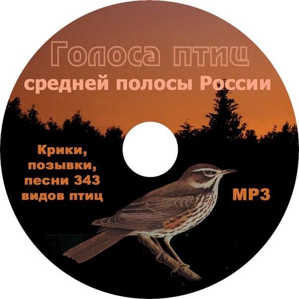 звуки российских птиц прохладных