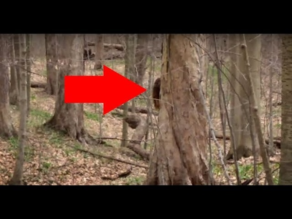 BIGFOOT FOOTAGE!! I Think I Just Filmed A REAL SASQUATCH Hiding Behind A Tree!!