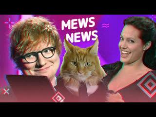 Mews news | джоли, ed sheeran, бузова