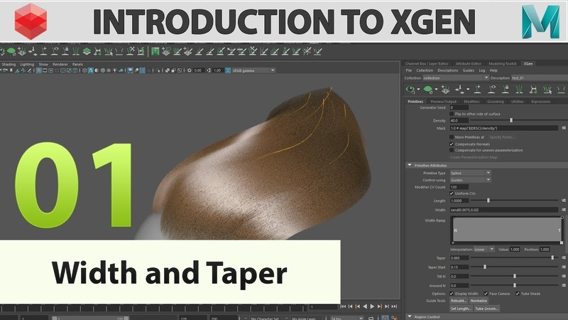 Introduction to Xgen 01 Width and taper