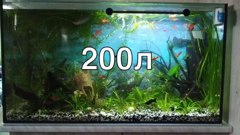 Подводная жизнь в 200л