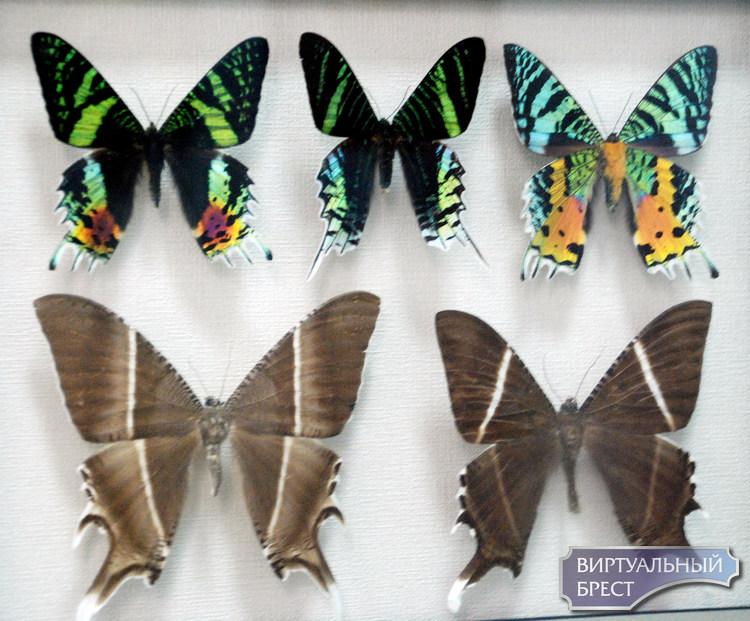 Уникальная выставка «Порхающие цветы» работает в музее Бреста