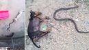 Hero Dogs Kill Snake To Stop It Getting In House