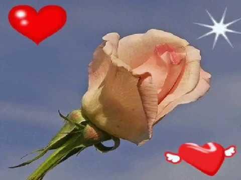 Dla kogo kwitną róże Ireneusz Lament