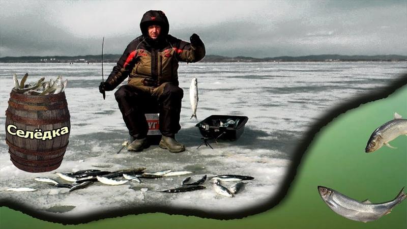 Селедка клюет как из бочки Рыбалка на блесна Закрыл сезон твердой воды