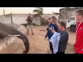 Вписка. вписались в зоопарке, камеру вырубай нах, слоники, прилетело, не ходите дети в африку гулять