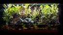 The ULTIMATE Fire Bellied Toad Paludarium 17 MONTHS LATER