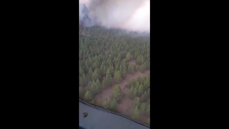 Видео пожара в резервате Семей Орманы