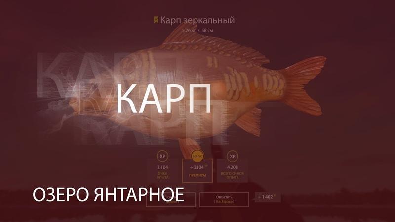 РР4 RF4 Русская Рыбалка 4 Озеро Янтарное Карп