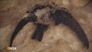 Мир после динозавров Месть млекопитающих 2 серия