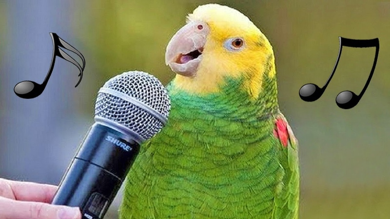 Funny Birds Sing, Dance Imitate Sounds – Parrots Bark, Meow, Mimic Baby, Phone Alarm Video