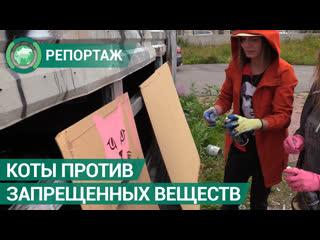 Активисты борются с рекламой запрещенных веществ с помощью котов. ФАН-ТВ
