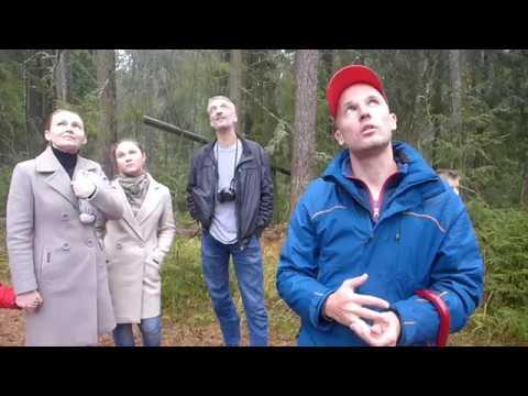 Фрагмент экскурсии в Линдуловской роще Пьяный лес кедр секвойи как узнать возраст дерева