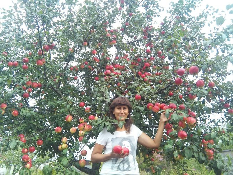 Кейс продажа саженцев и плодовых деревьев., изображение №1