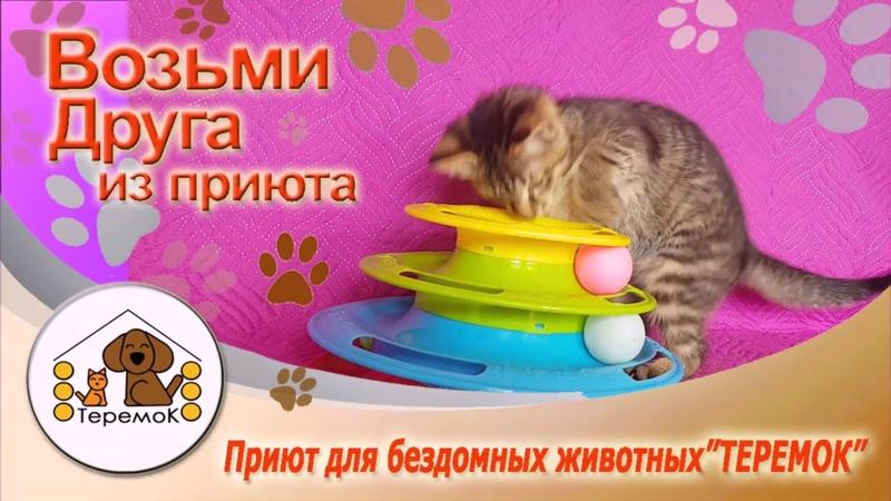Приют Для Бездомных Животных ТЕРЕМОК: Буба
