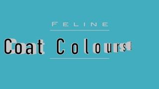 Окрасы кошек / Feline Colours and Patterns