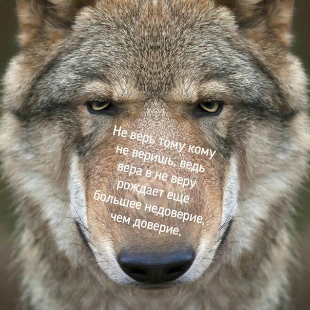 готовый коллаж для фото лицо волка приготовить