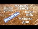 Музыка Генома - Ячмень cultivar OWB-D (R gene), partial cds