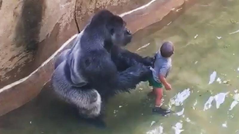 Настолько Неожиданных Случаев с Животными Вы Еще не Видели Топ 10