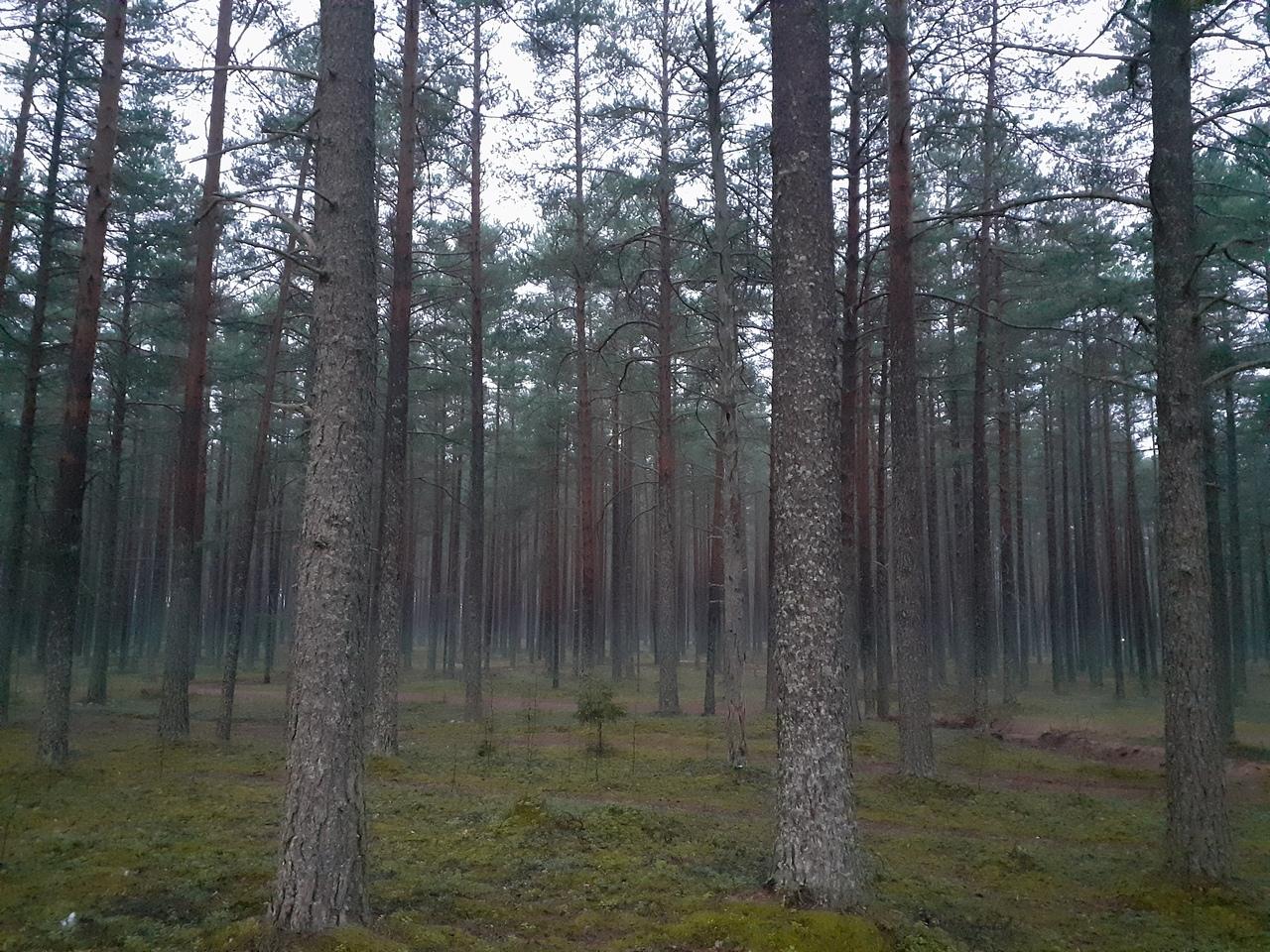 Осенний лес в Карелии. 10 ноября. (5 фото)