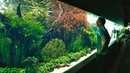 The World's Biggest and Best Aquascape emotional