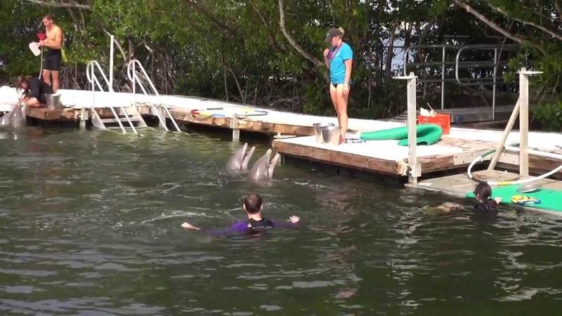Плавание с дельфинами в Ки Ларго ч.1. Экскурсии в Майами
